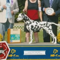 Patch Mt & Bellwether Dalmatians are expecting puppies