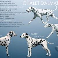 Chalet Dalmatians (LUA Breeding)